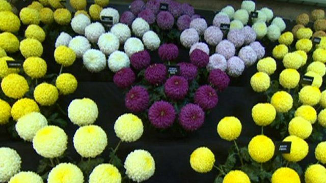 A view of Harrogate Flower Show