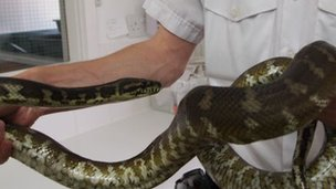 Jake the snake held by RSPCA inspector Steve Craddock