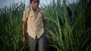Boy in sugar cane fields, Nicaragua