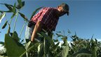 Farmers face rise of the superweeds
