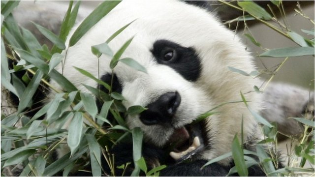 Mei Xiang (file pic)