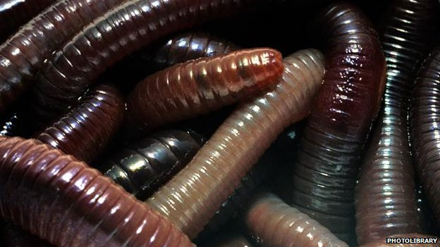 Earthworms (c) Photolibrary.com