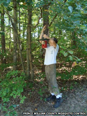 A man checks a mosquito traps in the woods