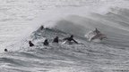 Surfers wait for waves as dolphins breach the bow of waves at Bondi Beach