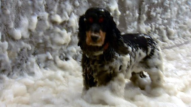 Bailey the dog in foam-covered Footdee