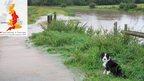 Sheepdog sitting by flooded lane