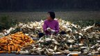 A woman sits on a pile of corn as she removes the husks on a road located on the outskirts of Beijing