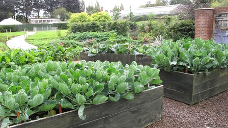 Urban veg hub