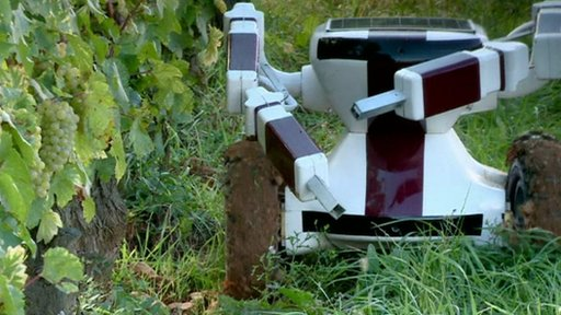 Robot at the vineyards