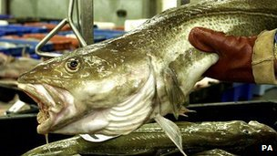 A cod