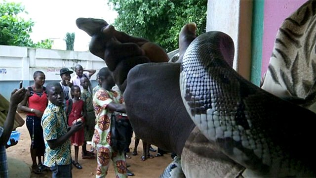A man holding a sacred python in Ouidah, Benin