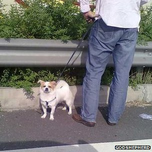 A stranded traveller walk his dog in the middle of a traffic jam on a highway in Suzhou, China, 30 Sept 2012 (Photo courtesy GodShepherd)