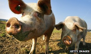 Outdoor pigs (c) Getty Images