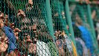 Sri Lankan cricket fans queue against a fence to buy tickets