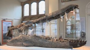 Fossilised skull of a pliosaur discovered on the shores of Weymouth Bay