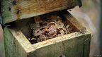 Dormouse nestbox