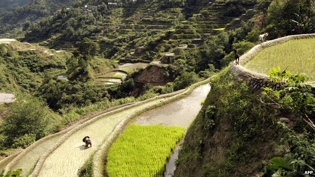 Banaue rice terraces in Ifugao province (2008)