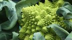 A Romanesque broccoli is displayed at the Royal Horticultural Show in London
