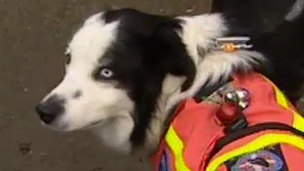 Isla the search dog