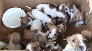 It is thought the pups had been bred on puppy farms in Ireland
