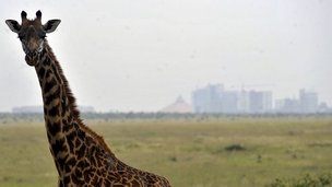 Giraffe and Nairobi skyline in distance