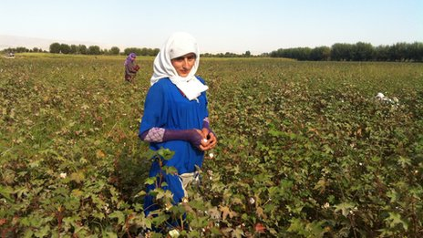 Cotton pickers in Tajikistan