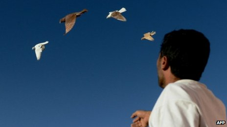 Afghan man Ahmad watching pigeons fly in Kabul, 3 October 2012