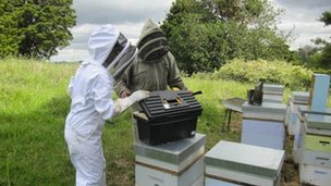 Oritain scientists working with New Zealand bee keepers