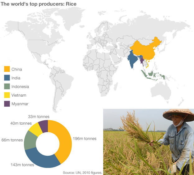 Infographic showing rice production