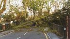 Elderly woman walking under fallen tree in Canterbury