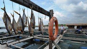 Singapore fish farm