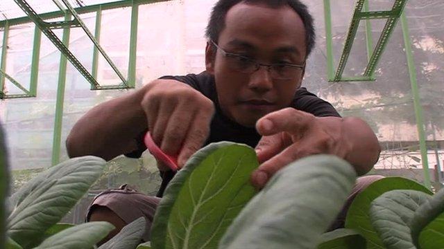 Urban farmer in Singapore