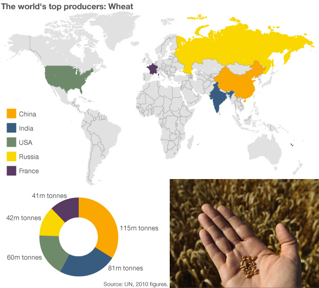 Infographic showing wheat production
