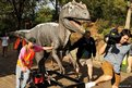 A television cameraman moves out of the way as an Allosaurus dinosaur