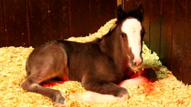 Abandoned foal
