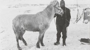 PO Edgar Evans with the pony Snatcher, Cape Evans, October 1911, copyright SPRI