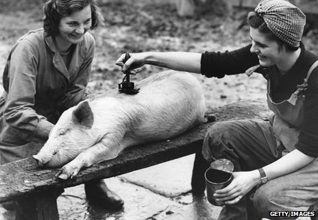 In 1959 two farm girls paint oil onto a pig