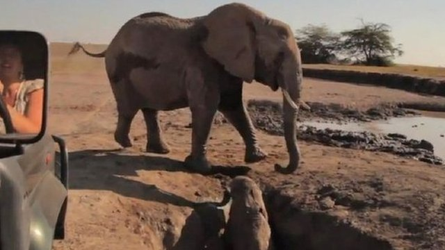 Elephant rescued from hole