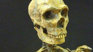 La Ferrassie 1's skull