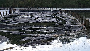 Geotextile bags at Salhouse Broad