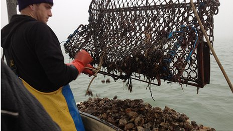Oyster catch