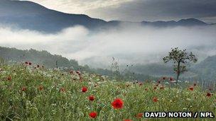 Mountain highlands: BBC Nature
