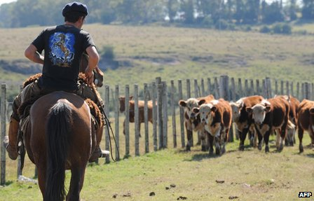 Herdsman with cattle near the Uruguayan town of Melo