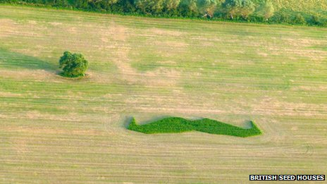 Moustache in a field near Wedmore, Somerset