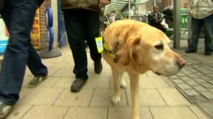Scrumpy the guide dog