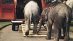 Elephants boarding a Transit van at Regent's Park Zoo