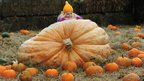 Amelie Kilner, aged four, sits on a giant pumpkin 
