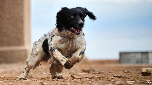 Theo, the bomb dog