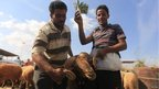 A sheep market in Benghazi, Libya - Wednesday 24 October 2012