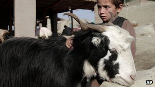 An Afghan child and a goat
